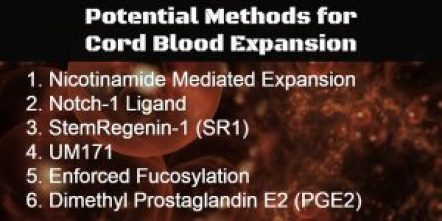 Strategies for Cord Blood Expansion