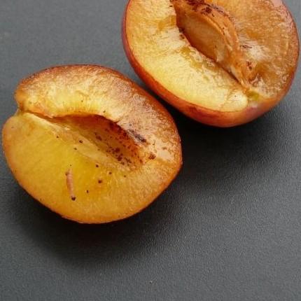 carpocapse des prunes