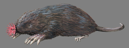 Image result for star-nosed mole