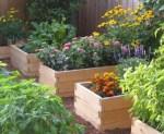 Καλοκαιρινή φροντίδα των καλλωπιστικών και καρποφόρων φυτών