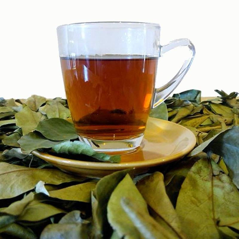 La tisane de feuilles de graviola corossol un traitement naturel contre le cancer