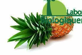La bromélaïne broméline traitement anti-cancer naturel extrait de l'ananas