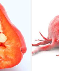 La Capsaïcine contenu dans le piment bio est un anti cancer naturel puissant