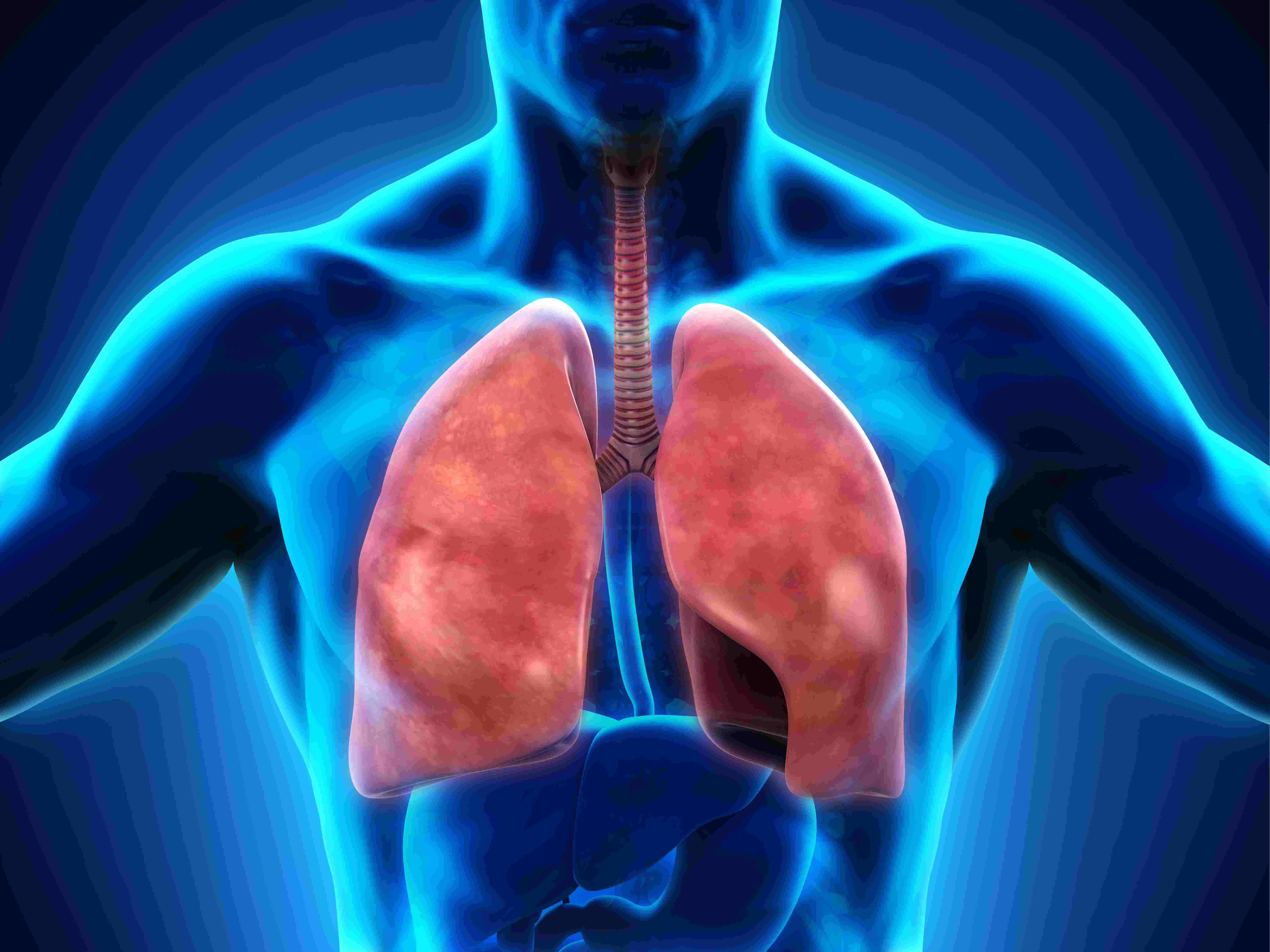 The key to understanding biology is a solid foundation in its most basic concepts. The Respiratory System