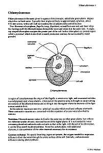Biology: Protista, Amoeba, Malaria, Paramecium, Spirogyra, Chlamydomonas, Euglena, Educational