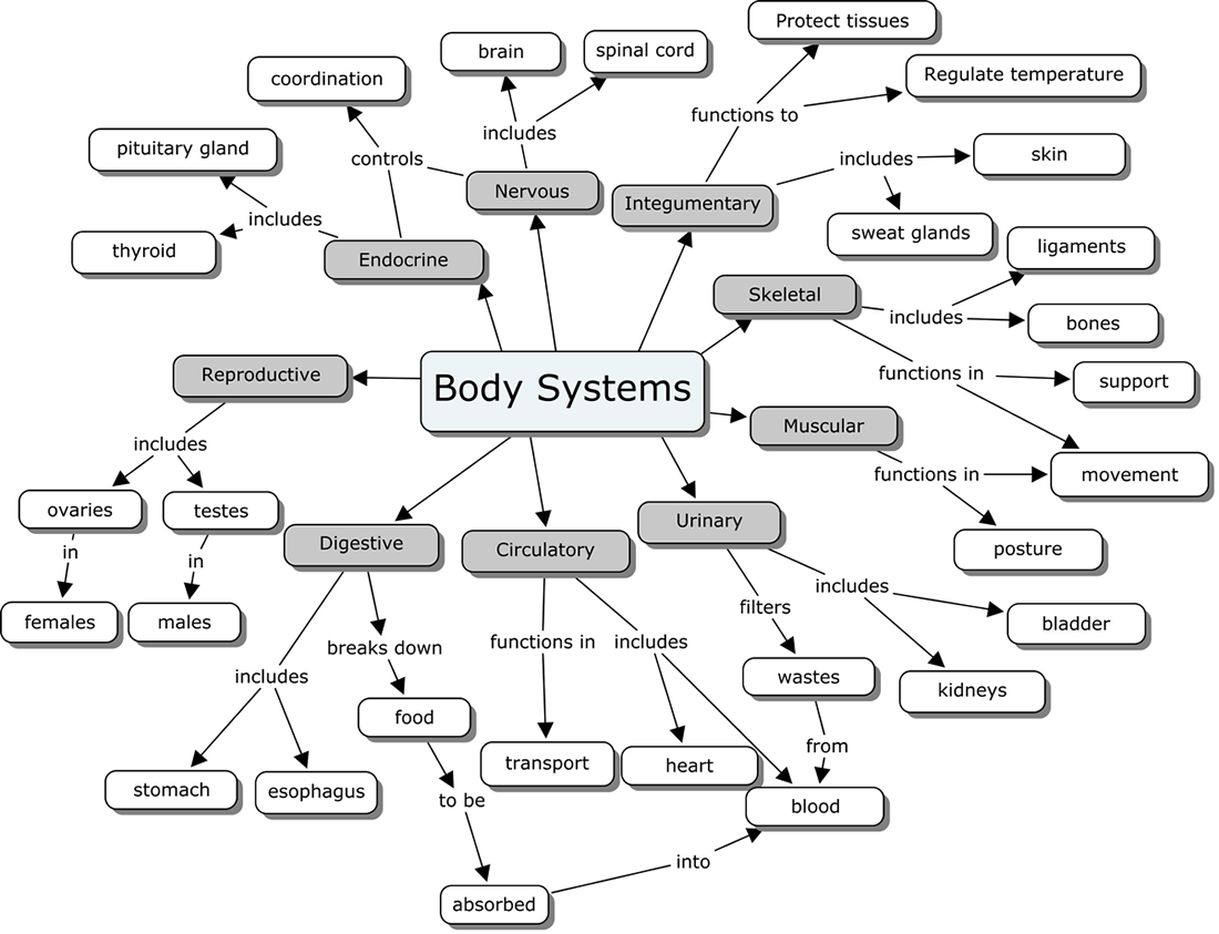 Human Systems Worksheets Images