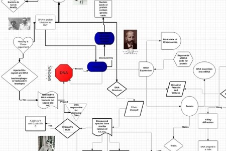 Organic Molecule Concept Map.Dna And Rna Review Concept Map Teaching Hs Biology