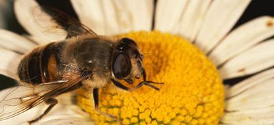 Επικονίαση - Μέλισσα - Φυτό