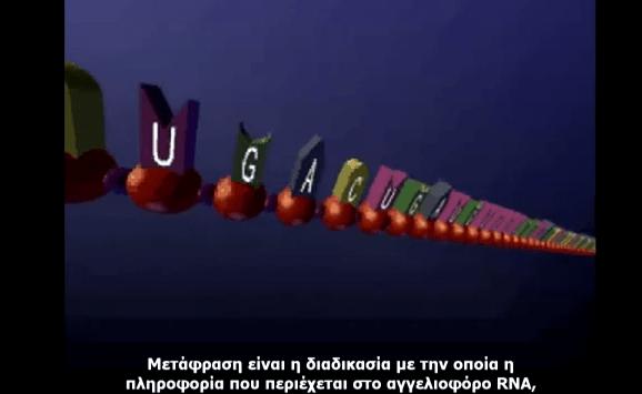 Μετάφραση RNA - Βίντεο με ελληνικούς υπότιτλους