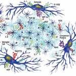 Κυτοκίνες: τα μόρια για πολλές δουλειές