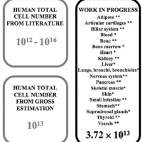 Πόσα κύτταρα υπάρχουν στο ανθρώπινο σώμα;
