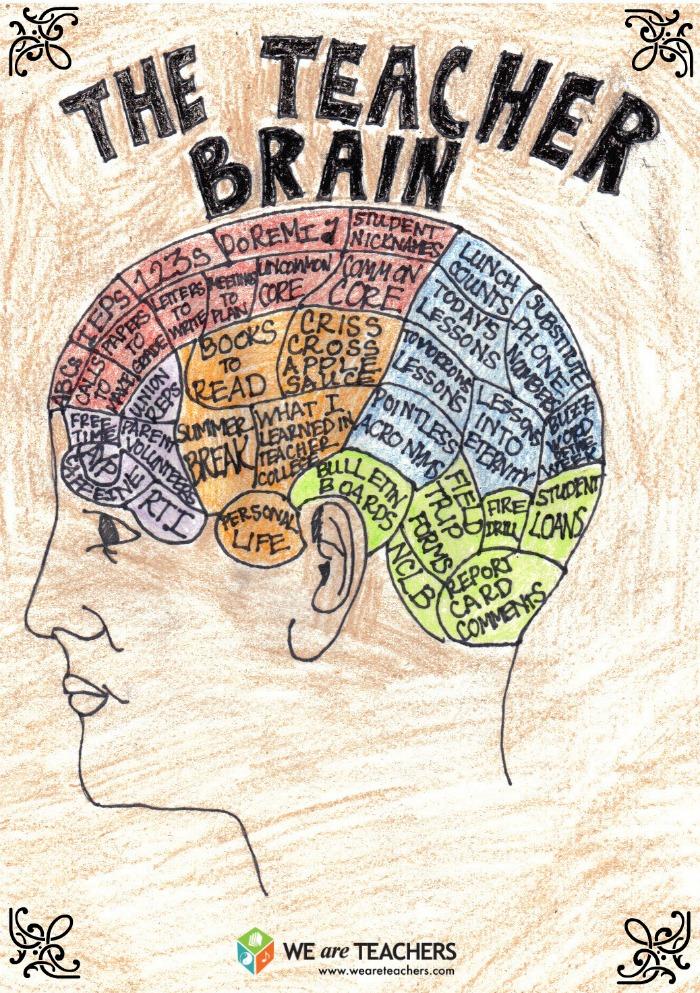 the-teacher-brain-a-helpful-guide