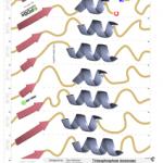 Τρισδιάστατη δομή πρωτεΐνης – Δραστηριότητα μοντέλο