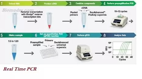 Types of PCR - Common Kinds of Polymerase Chain Reaction