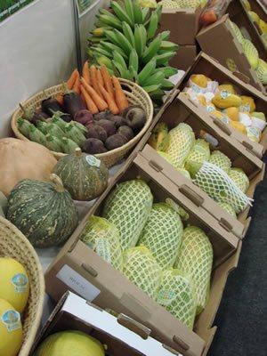 Impulso para la Agricultura Ecológica en Brasil
