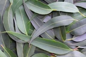Recetas con hierbas para controlar sudor excesivo