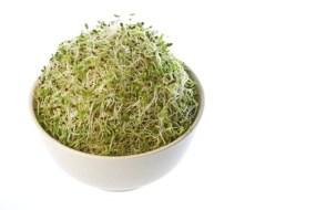 Recetas con Alfalfa germinada