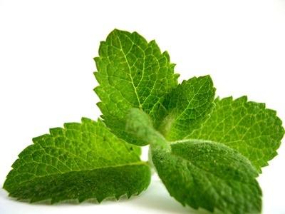 Plantas medicinales y Fitoterapia