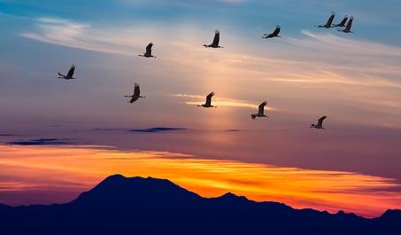 ECOTUR promociona la actividad ornitológica en España