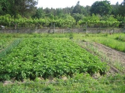 Crece la agricultura ecológica en Murcia
