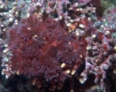 Extracto de algas, carragenina y cáncer