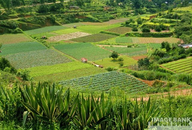 Agricultura ecológica en España. El plan estratégico