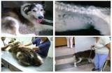 Medicina Tradicional China en mascotas