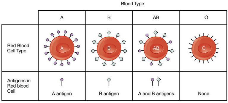 Table showing the antigens present in each blood type.