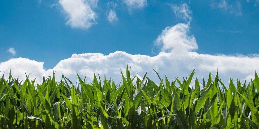 超級光合作用 下一世代人類糧食的解決方案!?