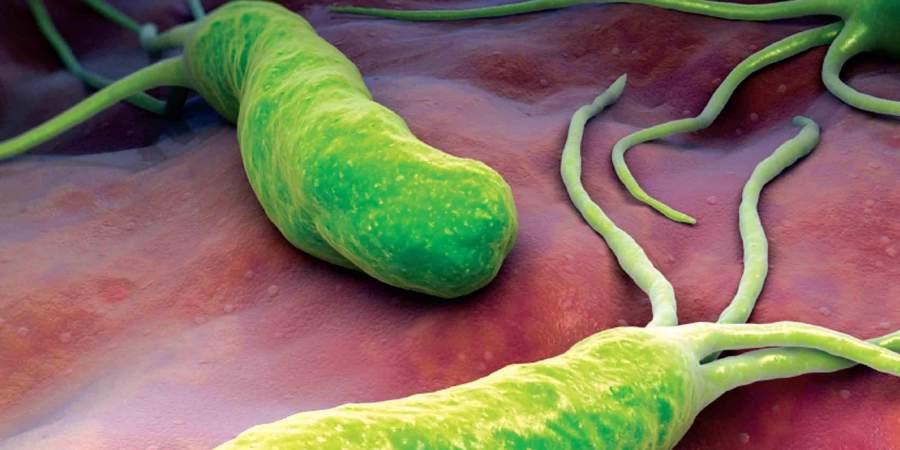 美研究發現:幽門桿菌能引發胃幹細胞生長