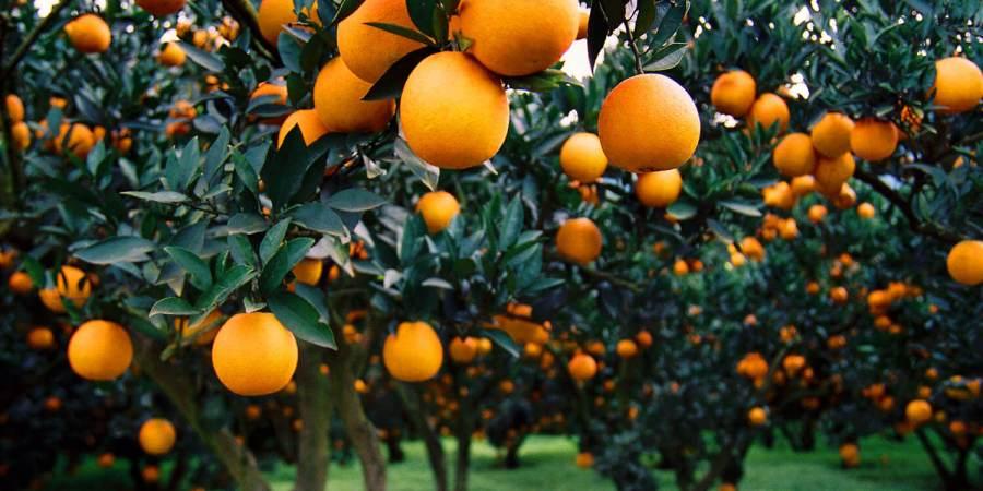 Home DR.特濃胺基酸EX 獨家專利柑橘幼果健康代謝不間斷