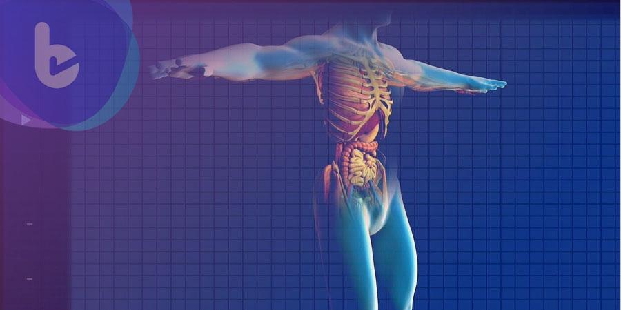 顛覆傳統認知新發現  肺竟是血小板生成器官?