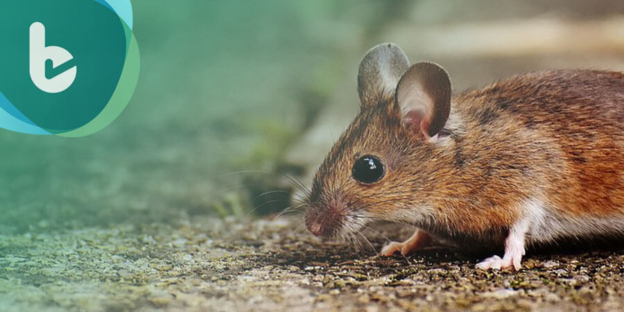 3D列印人工卵巢,讓不孕小鼠恢復生育功能