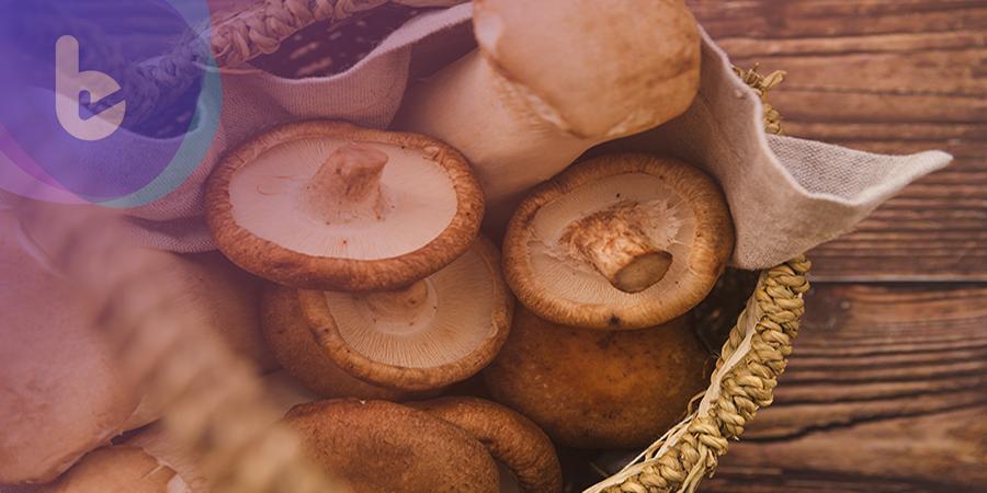 「香菇菌絲體」可護肝!?保健營養品新技術