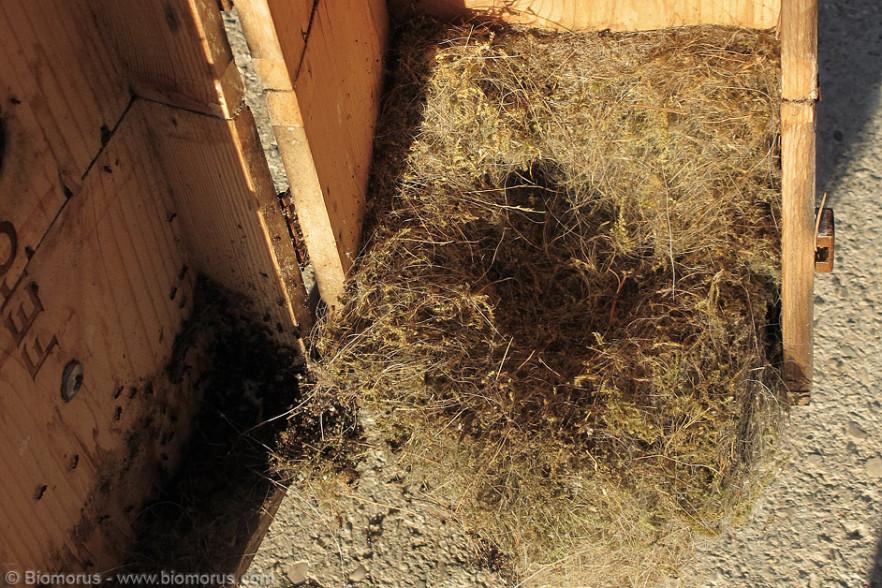 """La casetta delle cinciallegre aperta per le pulizie invernali. Ben visibile il """"letto"""" depositato pazientemente dalle cinciallegre."""