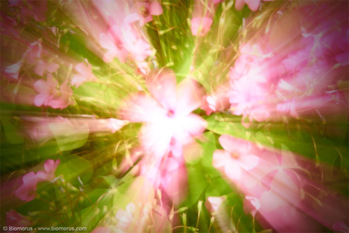 Esplosione di fiori