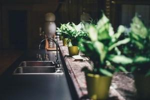 Comment cultiver des épices à la maison ?