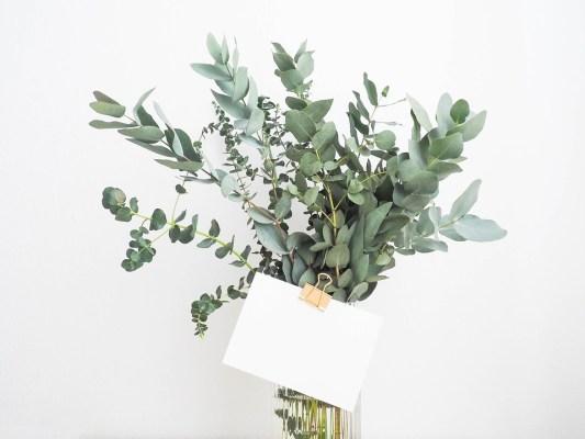 planter herbe aromatique à l'intérieur