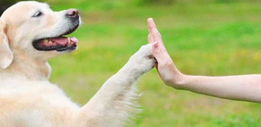 Addio alla solitudine per gli anziani grazie a un cane