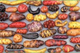 Image result for potatoes wild