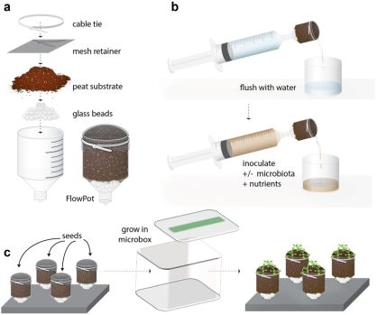 FlowPot axenic plant growth system for microbiota research | bioRxiv