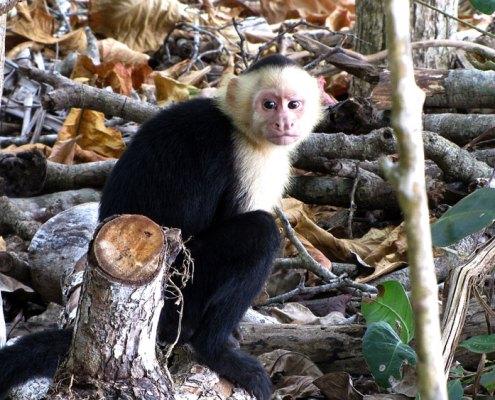 Reisebericht - Costa Rica 2013