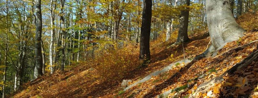 Vorträge - Der Natur auf der Spur ...