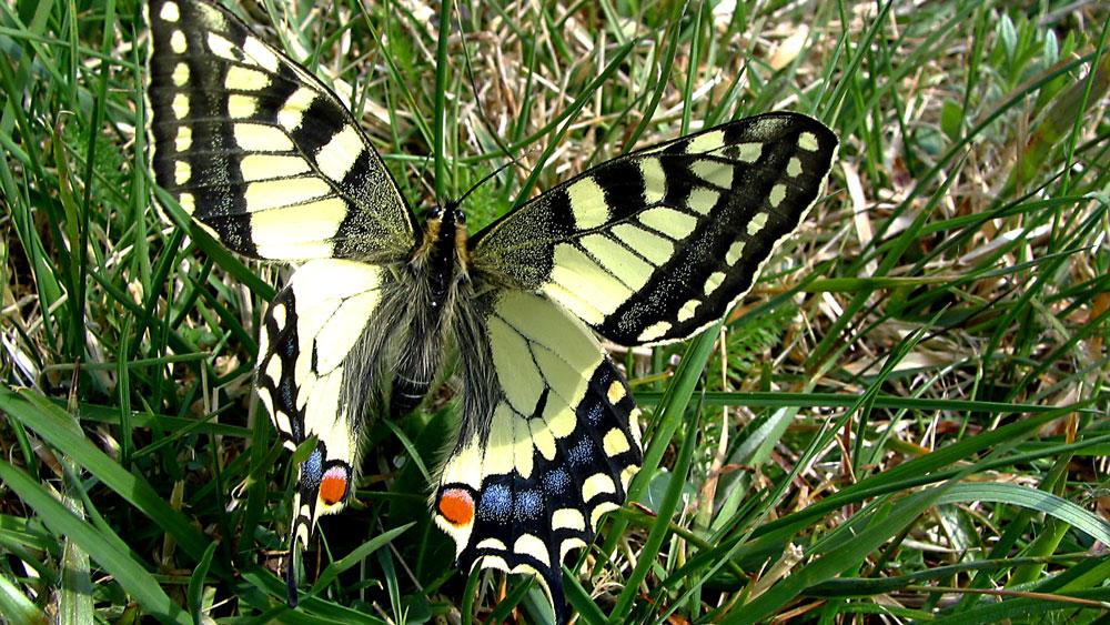 Leistungen - Natur- und artenschutzfachliche Kartierung