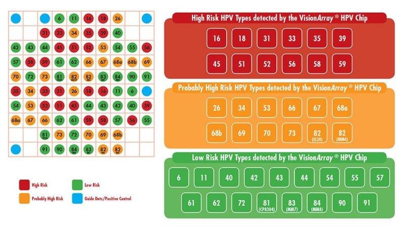 VisionArray HPV Chip - Bio SB