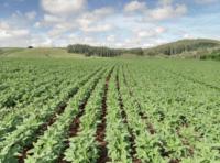 Programa de Agricultura Familiar da Cargill
