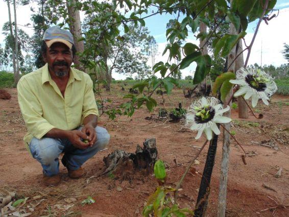 """José Cícero: """"Hoje, já planejamos voltar a cultivar o maracujá, pois teremos condições de investir na estrutura necessária em breve"""". (Foto de arquivo tirada no final de 2014)."""