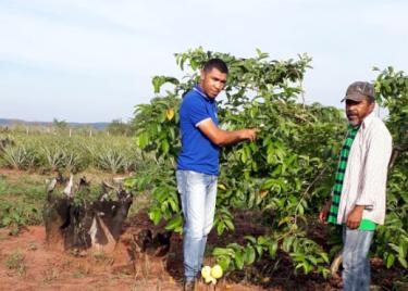José Cícero e o filho, Edenilton, verificam plantação de goiaba.