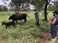 Programa promove fortalecimento da produção de leite e carne com ajuste da qualidade do produto.