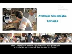 Vaca Móvel IBSpec – A Original